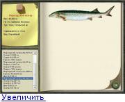 Рыба хек: польза и вред