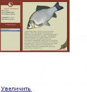 Рыбалка на Сома Донкой с берега Беларусь  YouTube
