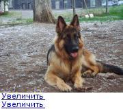 http://forumimage.ru/thumbs/20110627/130915350273005652.jpg