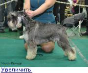 Хендлер Светлана Степанова (Новосибирск) - Страница 3 132150226350007151
