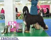 Хендлер Светлана Степанова (Новосибирск) - Страница 3 132150226741003766