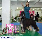 Хендлер Светлана Степанова (Новосибирск) - Страница 3 132150227049009051