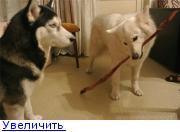 http://forumimage.ru/thumbs/20160103/145181398279945264.jpg