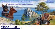 щенки цвергпинчера из питомника продаются г.Ангарск 151964163466869531