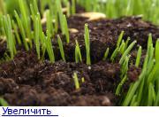 http://forumimage.ru/thumbs/20200928/160128035382692771.jpg