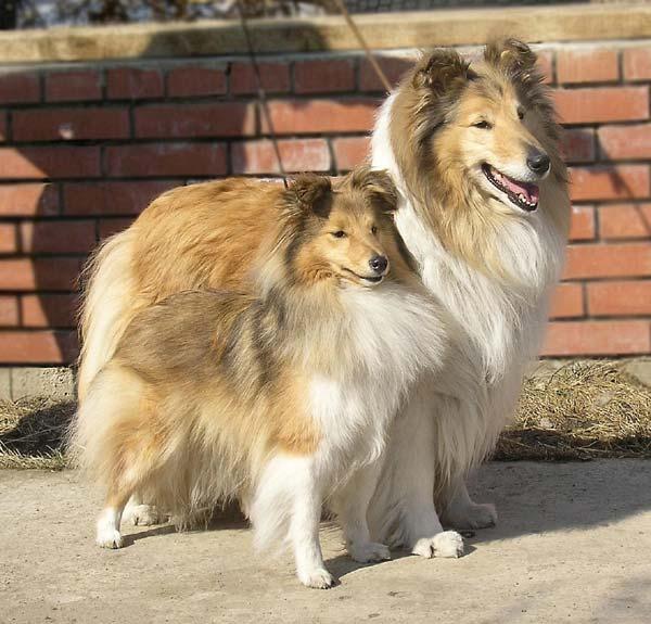 когда знакомить щенка с другими собаками