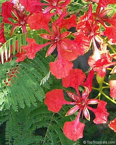 Выращивание рассады цветов на продажу какие цветы выгодно