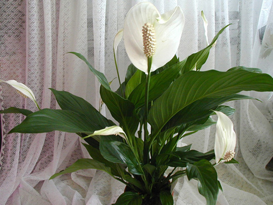 инструкция по применению удобрения bona forte для комнатных растений