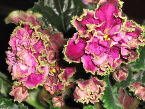 Летние цветы для клумб фото и названия