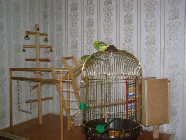 Как сделать своими руками домик для попугаев