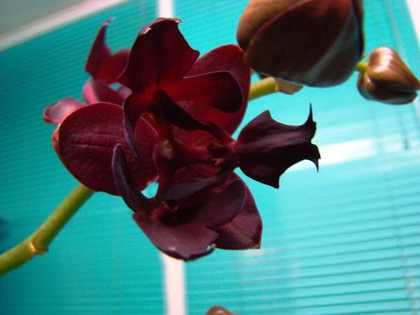 Клуб любителей комнатных растений