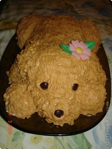 Торт собака из крема мастер класс