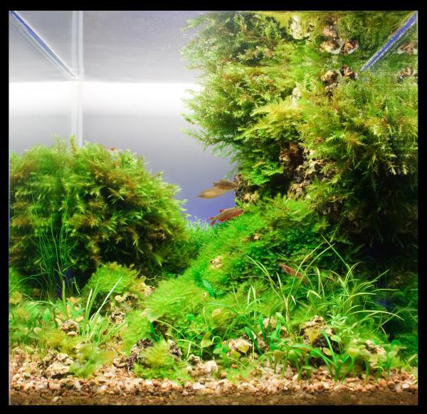 В нано-аквариумах устраивают