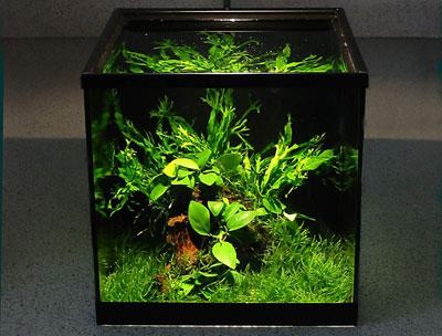 Дизайн аквариума нано