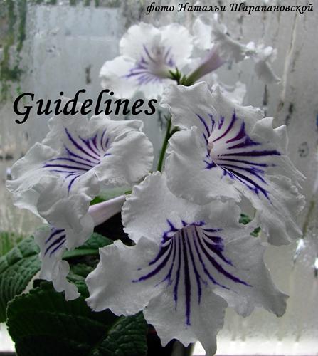 Guidelines (D. Thompson), Геснериевые от Ulmo, Фиалки, форум
