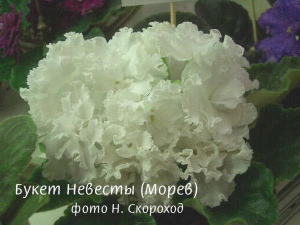 Фиалка букет невесты продажа цветов