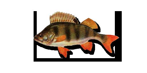 какая рыба клюет в конце августа