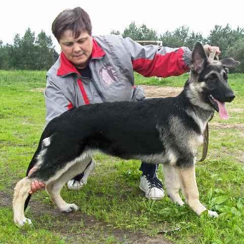 http://forumimage.ru/uploads/20101217/129259293297004457.jpg