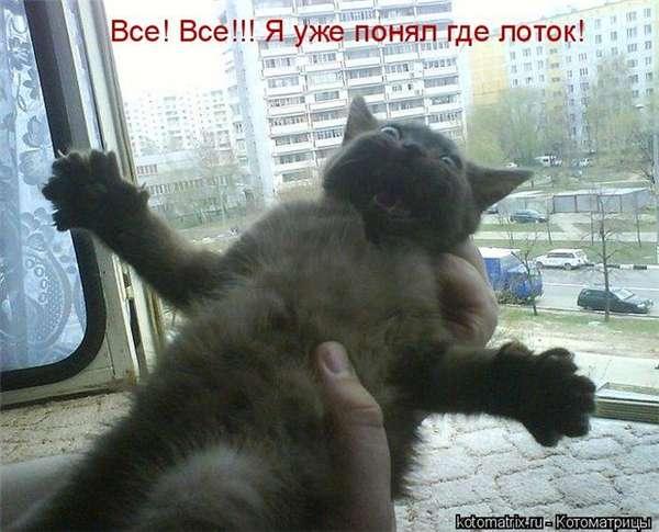 http://forumimage.ru/uploads/20101221/129295152548005714.jpg