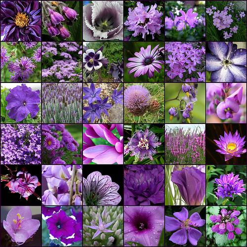 Цветы фиолетового цвета
