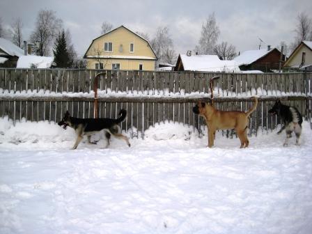 http://forumimage.ru/uploads/20110130/129637883462004693.jpg