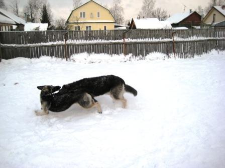 http://forumimage.ru/uploads/20110130/129637883833007740.jpg
