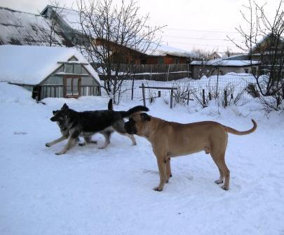 http://forumimage.ru/uploads/20110130/12963788394000387.jpg