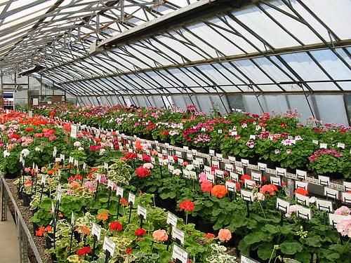 Предприятие по выращиванию цветов 39