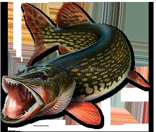где сейчас ловится рыба в астраханской области
