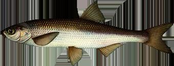 где сейчас клюёт рыба в кирове