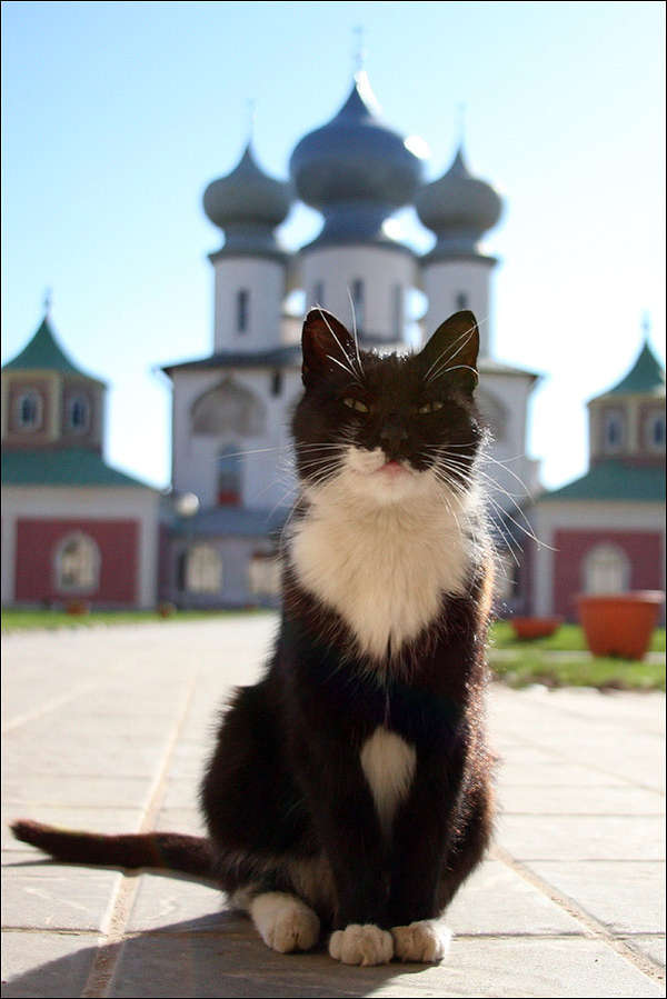 http://forumimage.ru/uploads/20110317/130038457158001531.jpg