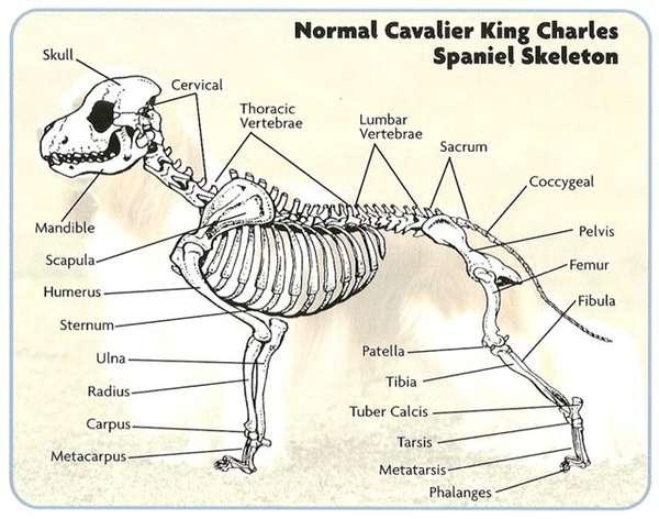 Схема движения собаки