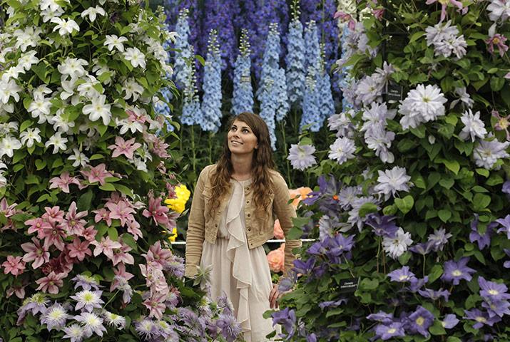 Chelsea flower show выставка цветов в челси