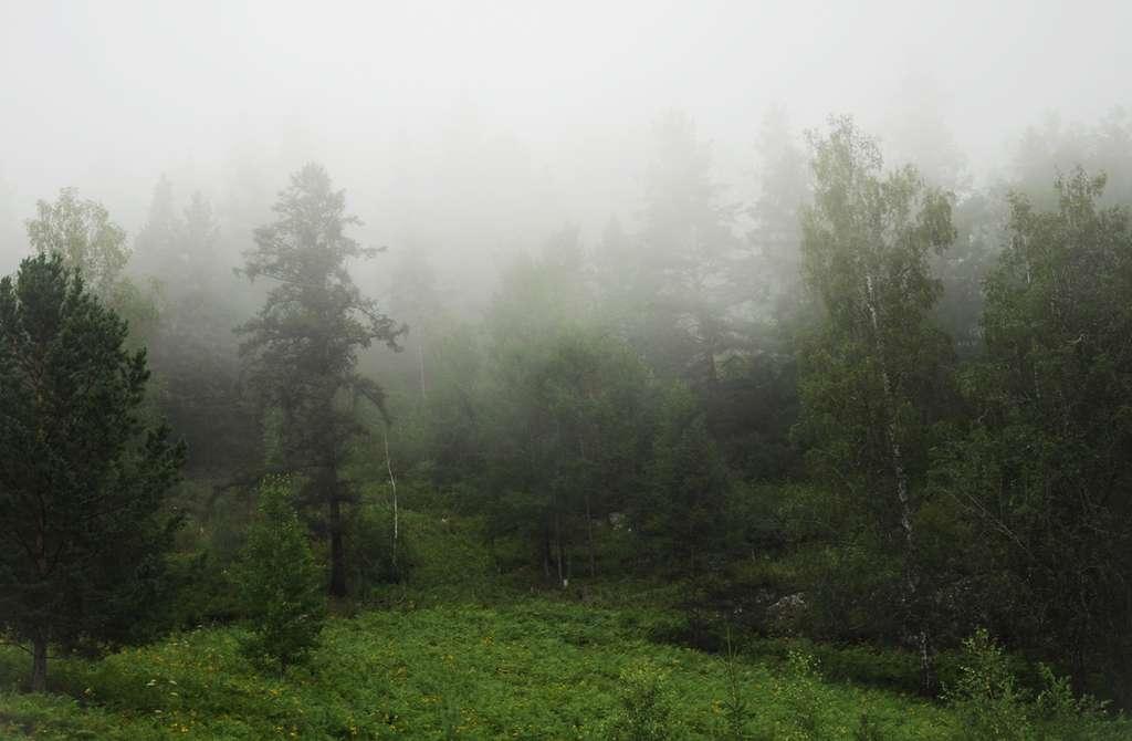 кисти для фотошопа туман: