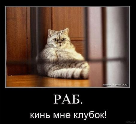 http://forumimage.ru/uploads/20110821/131391857144008864.jpg