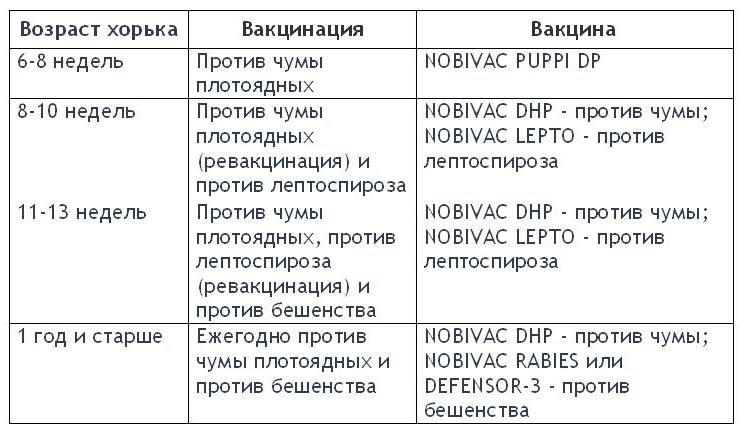 служит для прививки йорку по возрасту таблица Санкт Петербурге