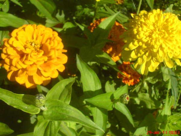 Цветы рябчики уход вейгела фото уход