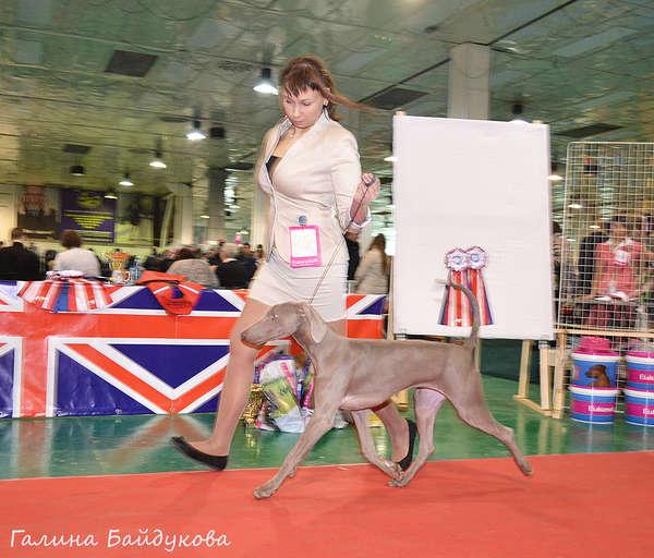 Хендлер Светлана Степанова (Новосибирск) - Страница 3 132342007295002436