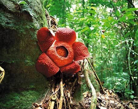 Мистические существа древних джунглей Растения