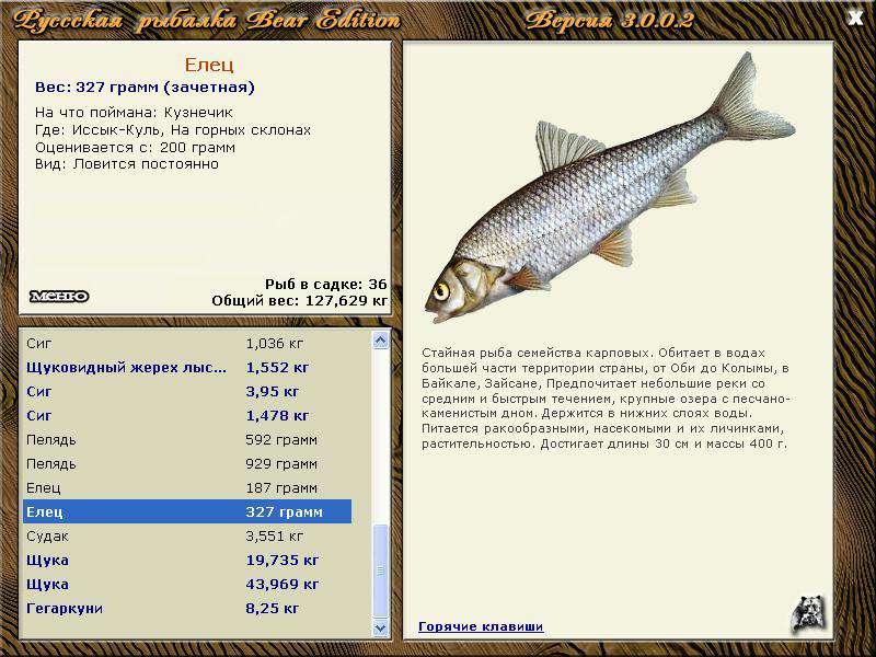 Куль • Русская Рыбалка 3 Bear Edition