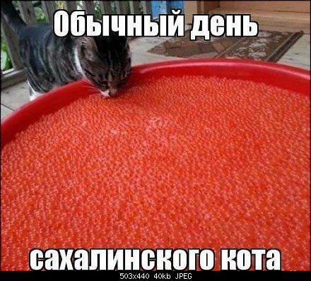 http://forumimage.ru/uploads/20140330/139616461694282072.jpg