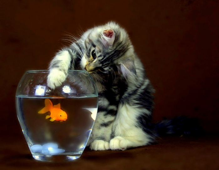 кот который ловит рыбу лапой
