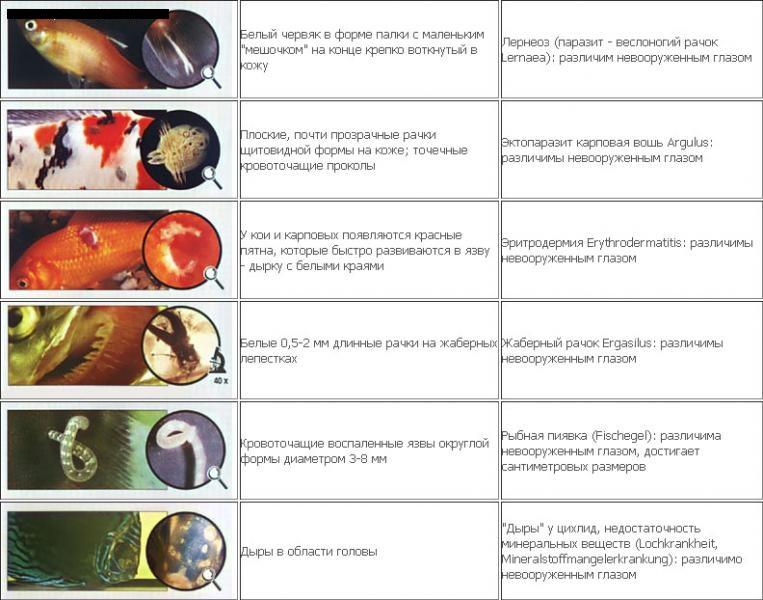 Вирус папилломы человека (впч - симптомы и лечение) вирус папилломы человека (впч удаление жировика