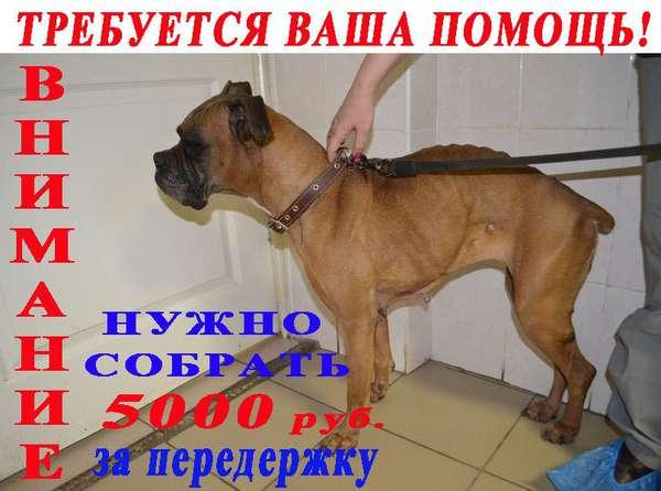 http://forumimage.ru/uploads/20140507/139949309566696442.jpg