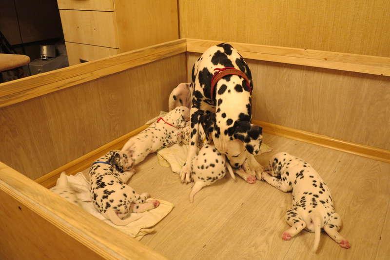 Загон для щенков,родильный
