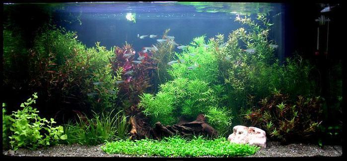 Форум аквариумистов • Просмотр темы - Пресноводные раки в ...