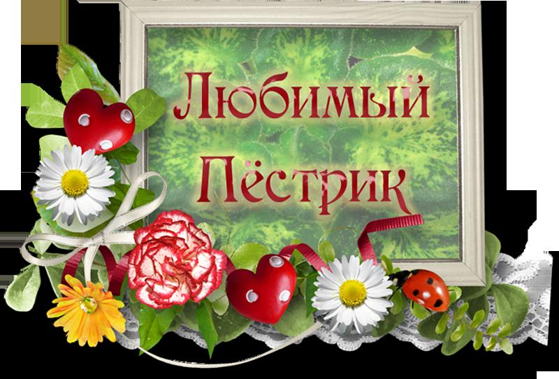 """конкурс """"Мой любимый пёстрик"""", Геснериевые от Ulmo, Фиалки, форум"""