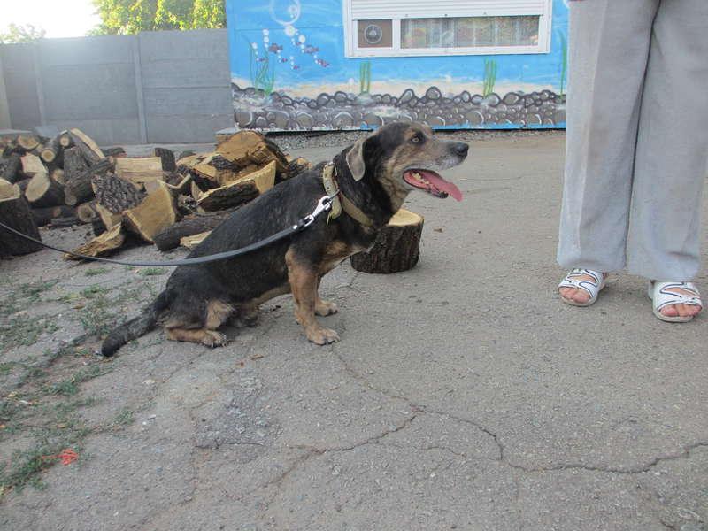 Дружок - пес, который пострадал от овчарки и его хозяина