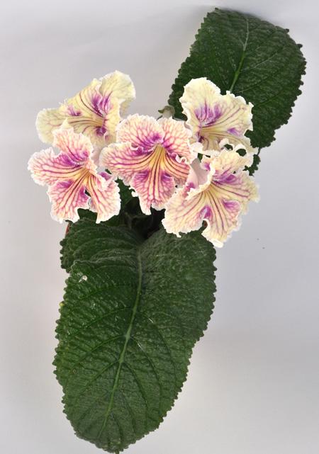UA-Закат - Фрау Флора растения и цветы