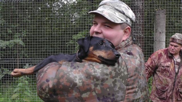 Немецкий охотничий терьер.